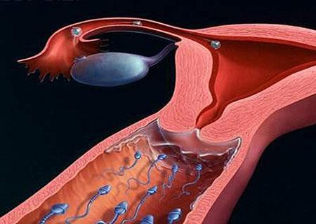 Tinh trùng gặp trứng ở cổ tử cung
